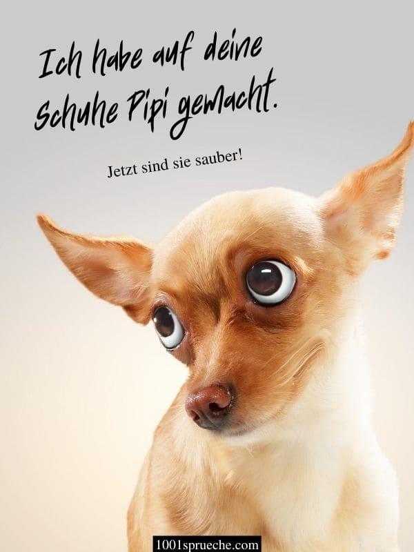 LUSTIGE TIERE BILDER (49 +) Zum Totlachen | Hunde, Katzen ...